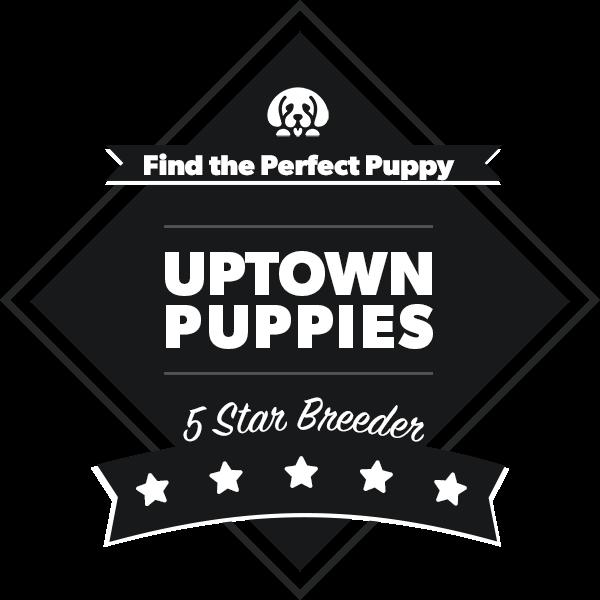 Puppy Finder by Uptown Puppies